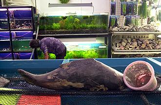Fish trade drying up?