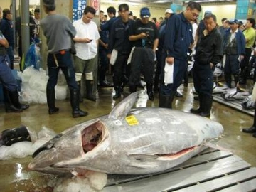 Japan sells giant tuna at a Tokyo fish market
