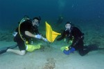 Raising plots of rare corals to repopulate depleted Florida and Caribbean reefs