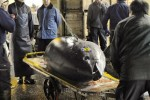 Big tuna fetches record US$396,000 in Tokyo