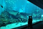World's Largest Aquarium Opens in Singapore