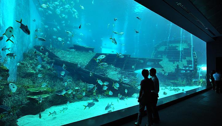 World S Largest Aquarium Opens In Singapore Skimz Reef