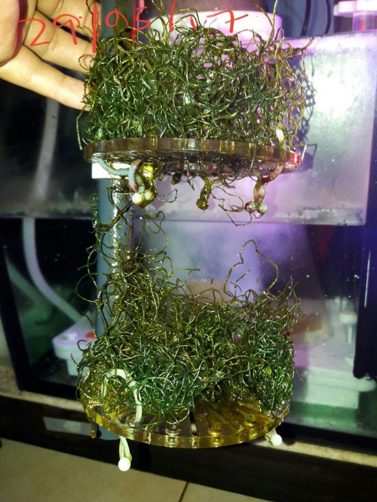 skimz macroalgae reactor